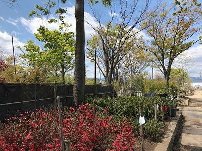 木と花と石をみる