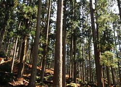 近くの山の木を使います